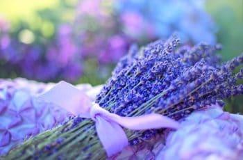 Aromas para Tranquilizar sua Vida
